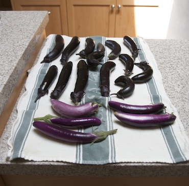Two kinds of eggplants, washed.